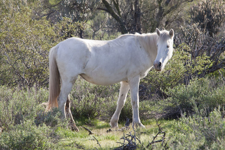 Horse standing on grassy field in tonto national forest