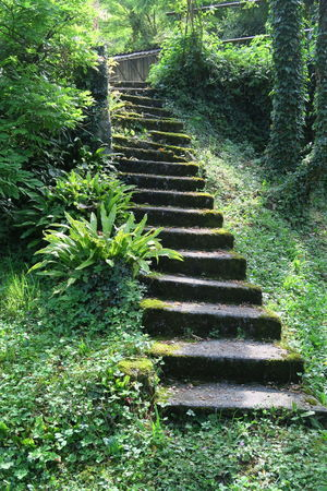 Beauty In Nature Day Fern Forest Grass Green Color Growth Nature No People Outdoors Plant Slowenia Slowenien Spiral Staircase Steps Steps And Staircases Tree