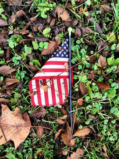 Leaf Plant Patriotism No People Outdoors Growth Day Nature Close-up Stars And Stripes Cemetery Graveyard Grave Flag Ground Growth American Flag American America Red White And Blue EyeEm Gallery