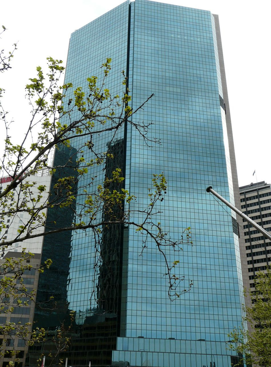 architecture, building exterior, skyscraper, low angle view, built structure, modern, growth, day, no people, outdoors, corporate business, city, tree, sky