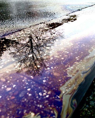 Spiegelung Baum Färben Autos Gift Für Die Natur