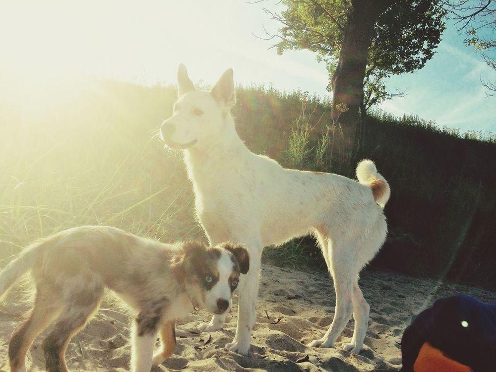 Dogs Dogslife Dogs Of EyeEm Dog Dog❤ Dog Love Beach