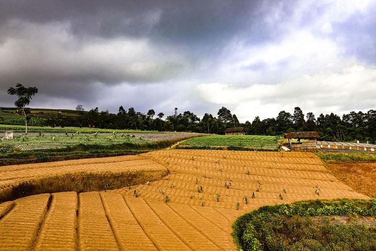 farmland EyeEm