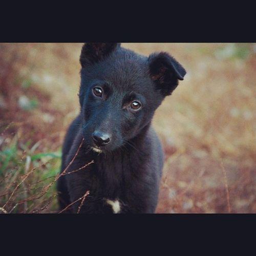 Домой возьмешь? щенок солнечно дневник_наблюдателя Puppy sunny insta_dogs kiev kievblog insta_kiev syrets сырец cool_pics