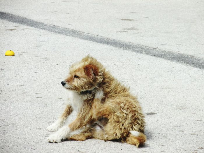 Dog relaxing on the road
