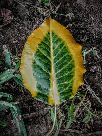 fallen Leafcollection Shapes And Forms Minimal Pattern Multi Colored Close-up Green Color Textured  Leaf Vein