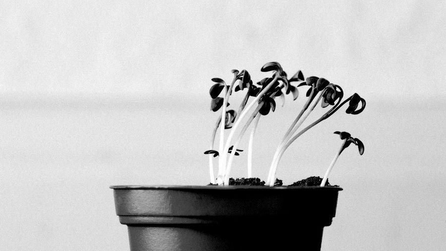 Grown Plants