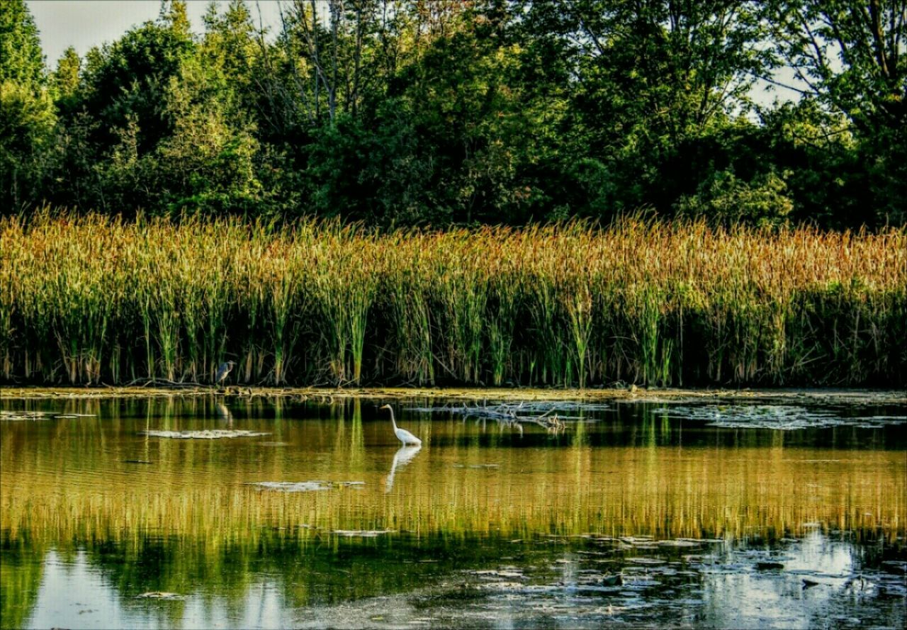 reflection, animals in the wild, one animal, bird, lake, animal themes, animal wildlife, outdoors, nature, tree, no people, water, grass, day, scenics, plant, beauty in nature