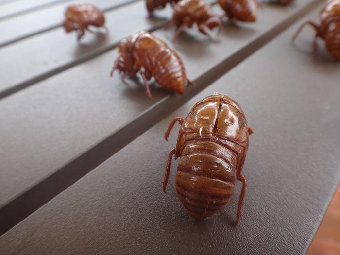 High angle view of cicada shells on table
