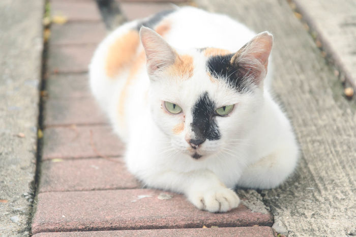 Animal Themes Cat Close-up Day Domestic Animals Domestic Cat Feline Looking At Camera Mammal Nature No People One Animal Outdoors Pets Portrait Tortoiseshell Cat
