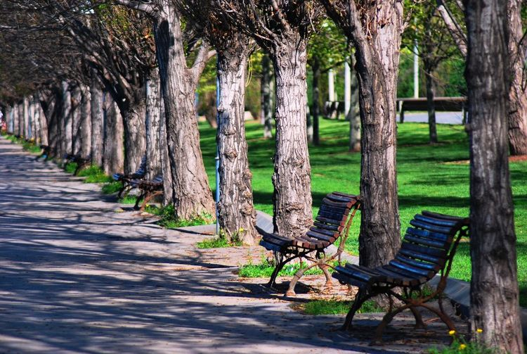 Benches Beside Trees In Park