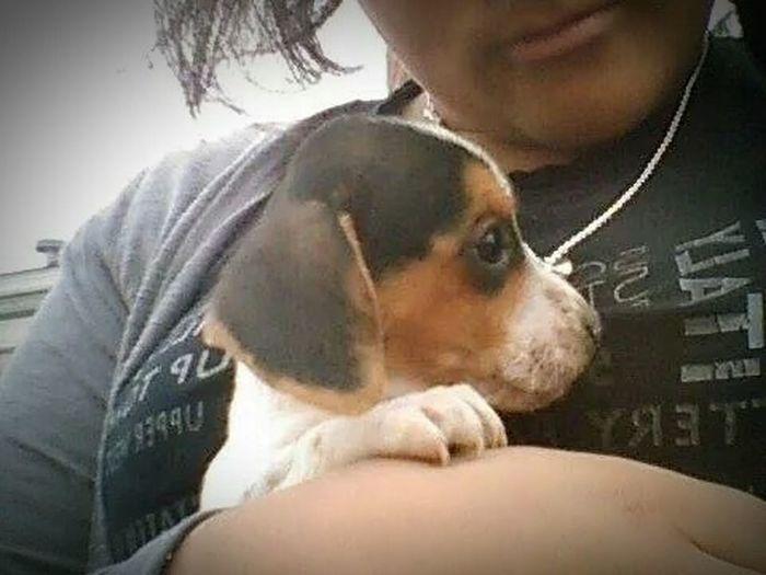 I love my puppy ?he so cute ??