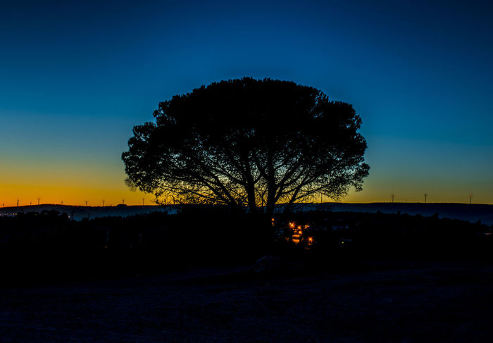 Wind Power Sunset_collection Beauty In Nature Landscape Landscape_photography Nature Outdoors Sky Sunset Tree Trees Tree_collection  Trees And Sky Tree And Sky Treescape Tree Art Treecollection Night Photography Nightscape Nightview Nightsky