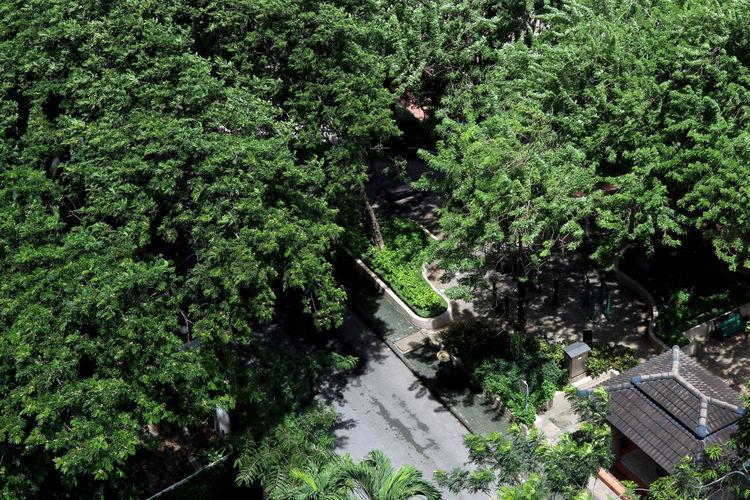 public garden,