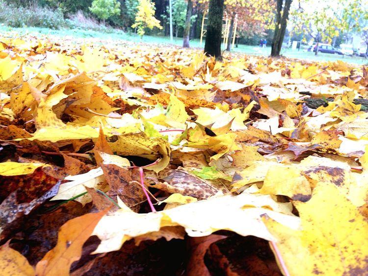 Autumn Autumn LEAST Tree Fullday October