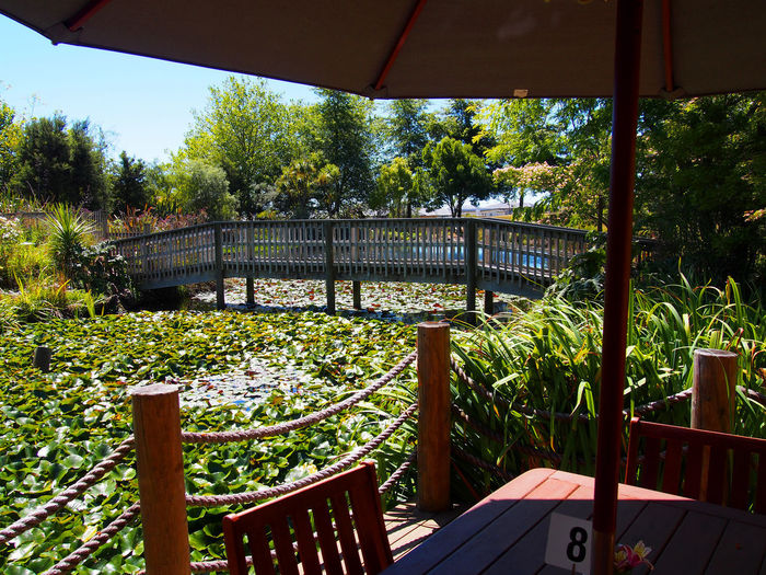 Footbridge Fossil Ridge Nelson New Zealand Monet Style Garden Planned Beauty View From Table Water Lily Pads Beauty In Nature No People Outdoors Shade And Sunshine Water Surface
