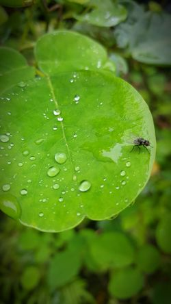 Nature Drop Leaf Close-up A Fly By Falls Beauty In Nature Freshness Unusual Find A Fly Is A Fly