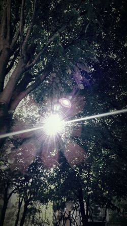 Soliel light Low Angle View Sunbeam Lens Flare Tree Sun Sky Sunlight No People Nature Outdoors Scenics Beauty In Nature Growth Star - Space Day Astronomy
