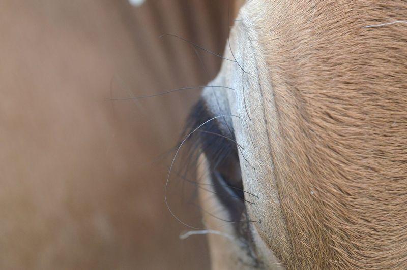 Animal Themes Eye Animal Head  Animal Photography My Best Photo