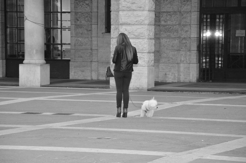 Woman with dog walking on zebra crossing
