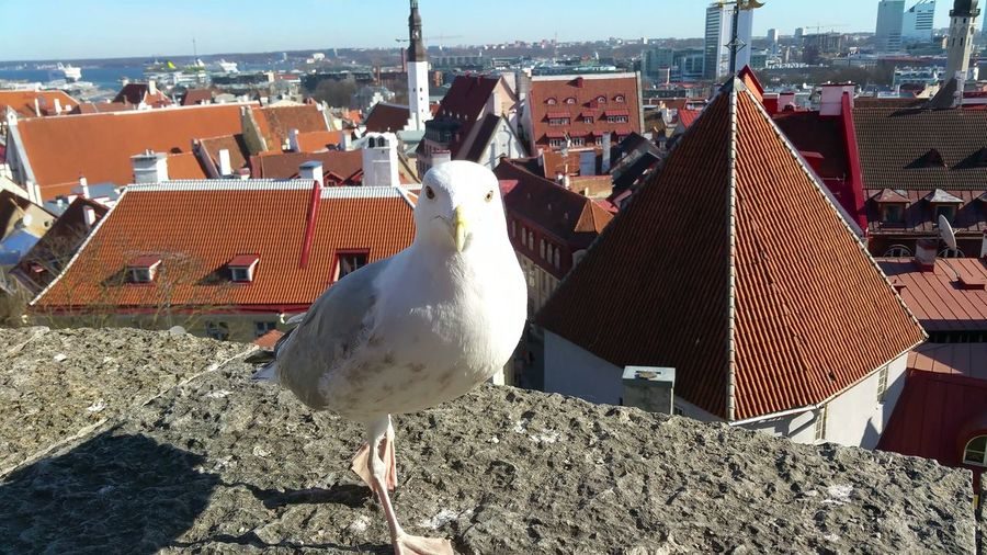 Seagull On Retaining Wall Against Cityscape