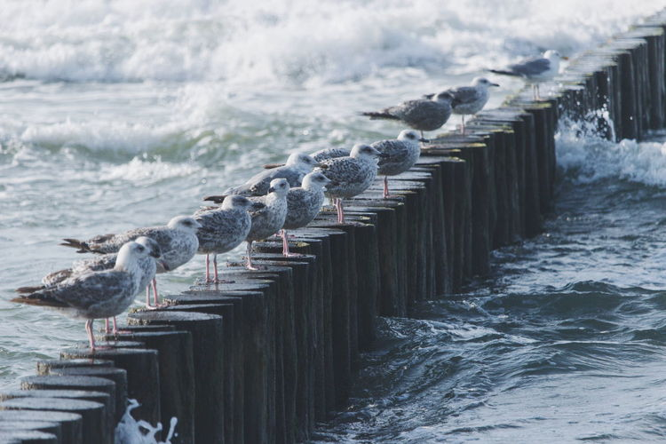 Seagulls perching on wooden post in sea