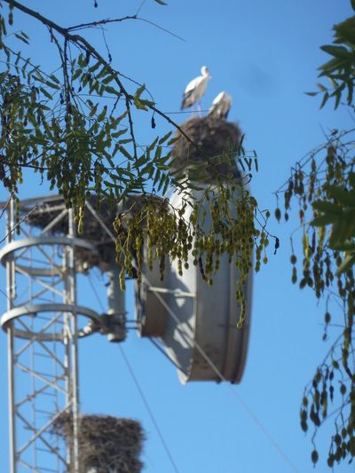 Low angle view of bird on plant against sky