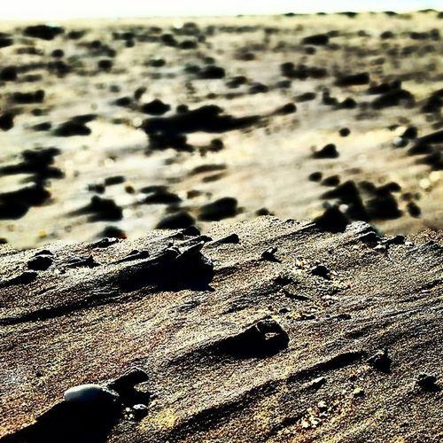 Minisanddunes Eastweather Seaandsand Seaside