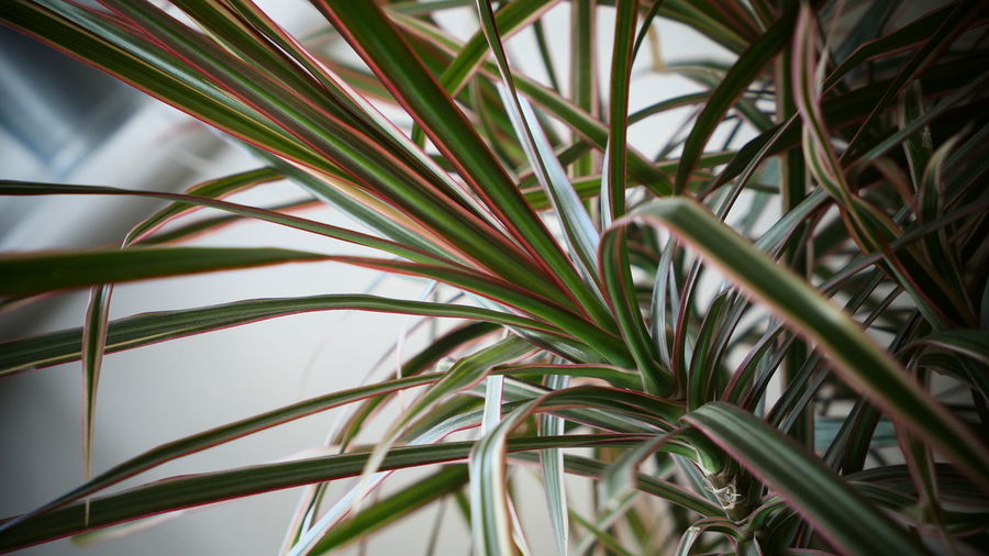 Low angle view of palm plants