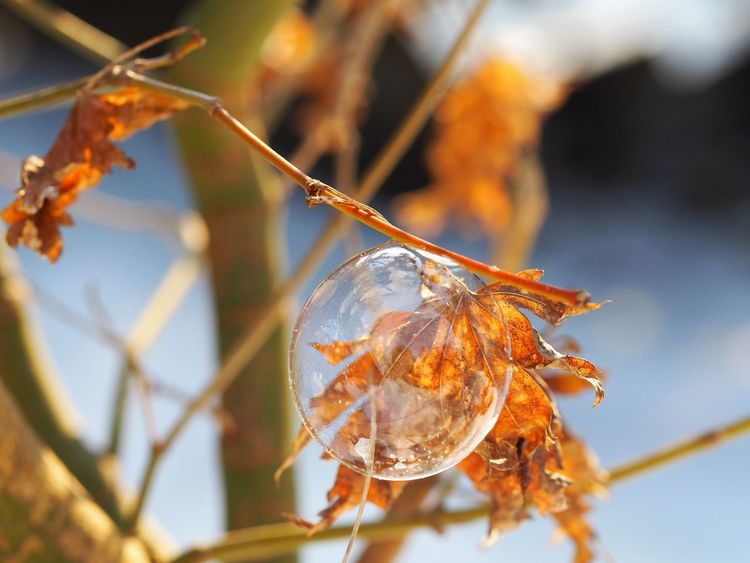Wintertime Focus On Foreground Fragility Frozen Bubble And Tree Frozen Bubbles Nature Wintermagic