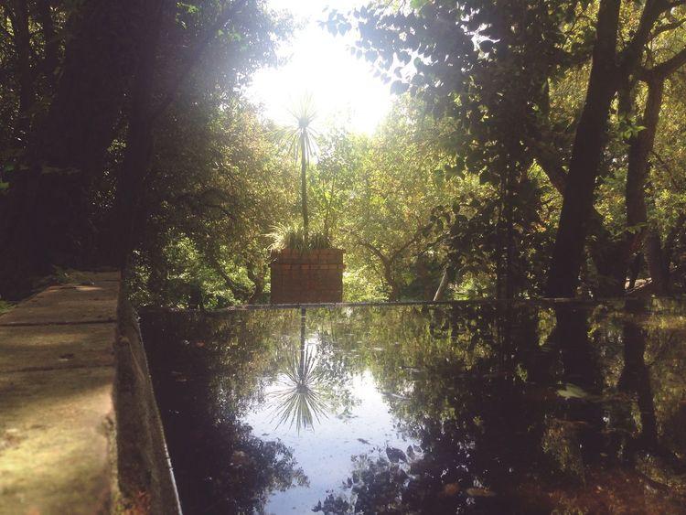 La belleza de los reflejos Agua Reflejos árbol Mirar Observar Estar Atento