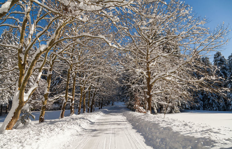 Road Shades Of Winter Slovenia Slovenia Scapes Bare Tree Beauty In Nature Branch Cold Temperature Day Frozen Landscape Nature Outdoors Rural Scene Scenics Snow Snowing Tranquil Scene Tranquility Tree Weather Winter