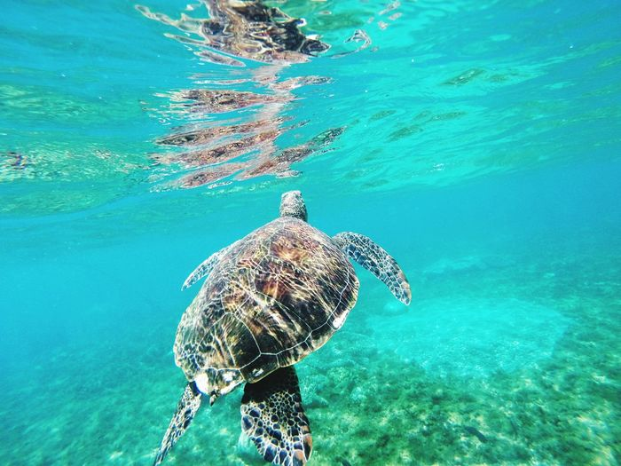 be wild and free Turtles Swimming Underwater UnderSea Fish Sea Water Scuba Diving Sea Life Animal Wildlife Snorkeling Animals In The Wild Nature