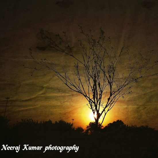 The beauty Sunset Tree Nature Silhouette Branch No People Backgrounds Beauty In Nature Neeraj Photography At It's Best Outdoors