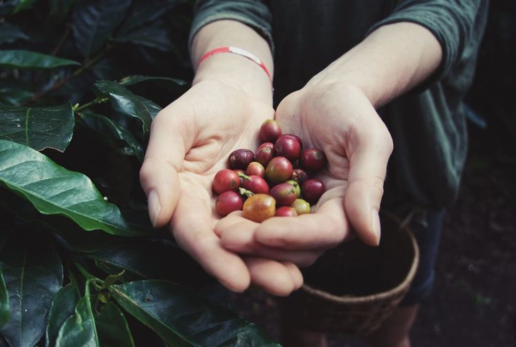 Cropped image of hand holding fruit