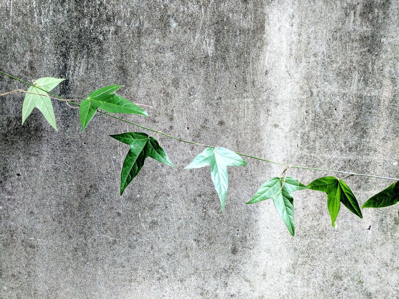 Shenq-Yuan Wang