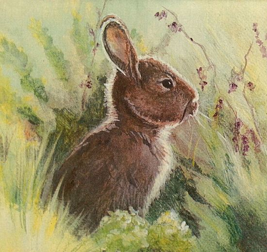 Osterhase . Pastell on special paper 20 x 20 cm 1985 . Art Painting Rabbit Portrait One Animal Nature Grass