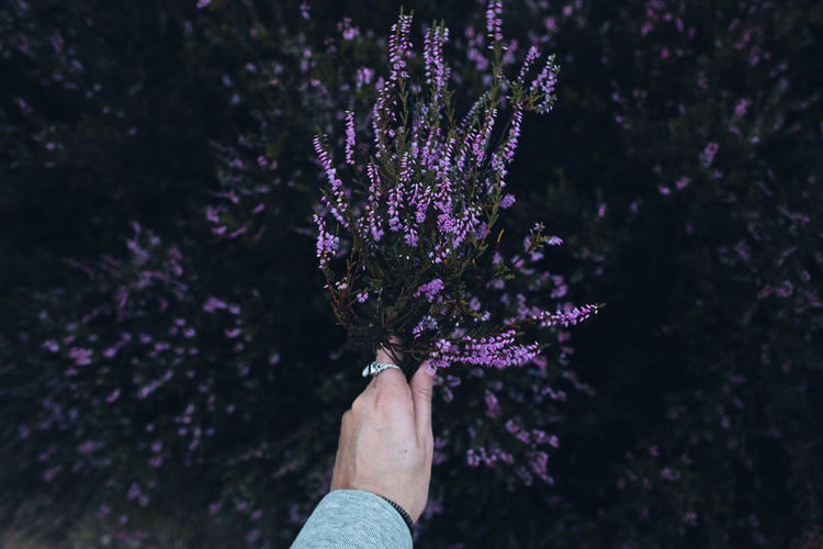 Low angle view of person holding purple flowering plant