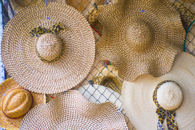High angle view of seashells