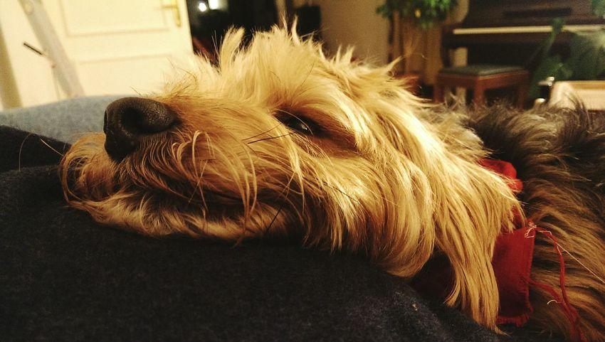 Ilovemydog Spring Dog Suprise Dog Hallo World Dog❤ My Beautiful Dog Summer ☀ Dog Love Dog You Dog