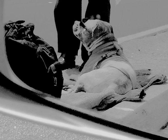 Homeless man and Kool dog on the streets of San Jose! Doglife Snapshots Of Life The Human Condition Kool Dog