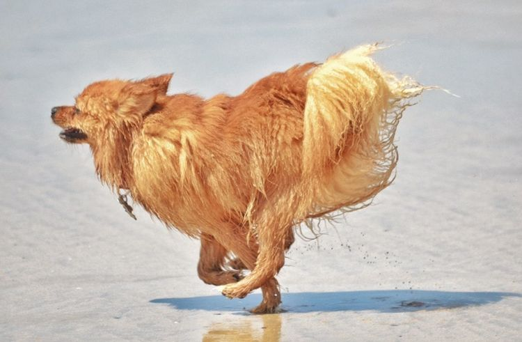 Not for Human Consumption 🐶 For The Love Of Photography Taking Photos Dogslife Dog Running Outdoors Beach Animal Fur Summer Hanging Out