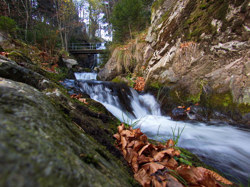 Autumn Autumn Collection Autumn Colors Beautiful Nature Freiburg GERMANY🇩🇪DEUTSCHERLAND@ Germany🇩🇪 Meditation Meditation Place Nature Nature On Your Doorstep Relaxing Schwarzwald Blackforest Bridge Close-up Forest River Naturelovers Relaxing Moments Scenics Tranquil Scene Walking In The Woods Water Water Flow