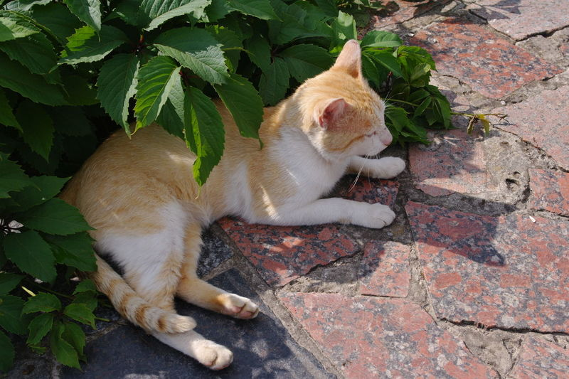 Ginger cat watching his shadow Animal Animal Themes Cat Domestic Cat Ginger Cat Mammal Nature Pets Relaxation Resting