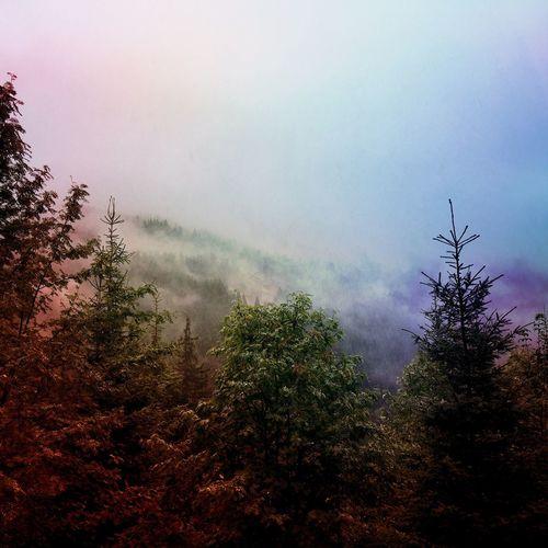 Krkonose Mountain Forest Fog Rain