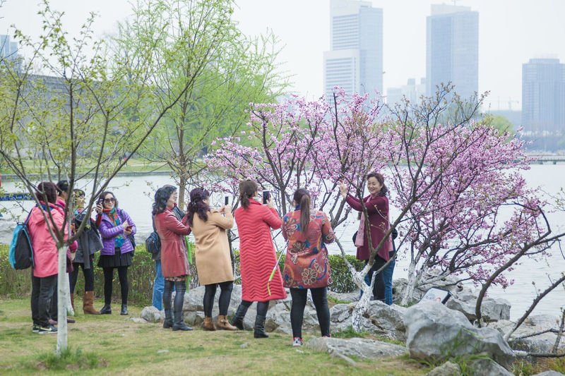 Lakeside Peach Blossom Spring The Crowd Visitors Willow City Cityscape Day Lake Nature Outdoors People Tree Water Waterfront Young Women