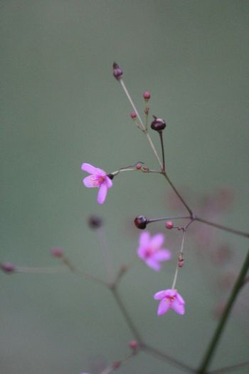 Petite Pink Flower Pink Plant Photography Plant Life Plants Nature Flowers Small Flowers No Filters  Nature Photography Outdoors Beauty In Nature Macro Photography