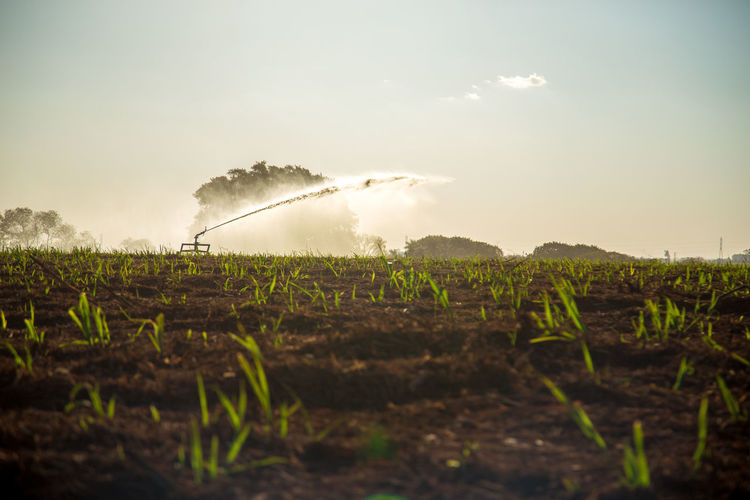 Agriculture Beauty In Nature Cloud - Sky Day Environment Farm Field Green Color Growth Irrigation Land Landscape Nature No People Outdoors Plant Plantation Pollution Rural Scene Scenics - Nature Sky Sugar Cane Field Tranquil Scene Tranquility