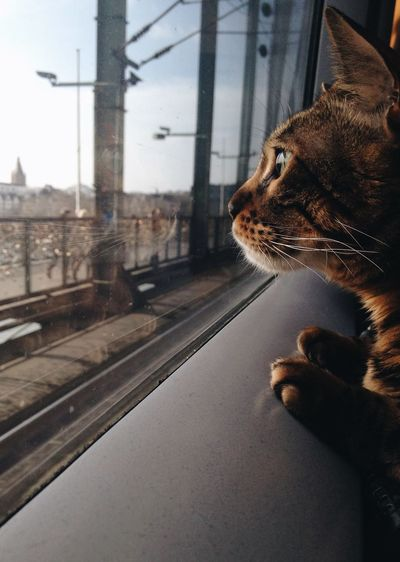 cat looking though window of a fast train Animal Themes Cat On A Train Day Domestic Animals Looking Through Window One Animal Pets Train Traveling Traveling With Pets Pet Portraits Summer Exploratorium