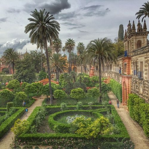 Réal Alcazar de Sevilla Real Alcazar De Sevilla Alcazar De Seville Alcazar Gardens Jardin Sevilla Seville Trees Palm Trees Eyemphotography Eyem Best Shots Eyem Gallery EyeEm Best Shots EyeEm Nature Lover Eye4photography  EyeEm Best Shots - Landscape EyeEmBestPics EyeEm Best Shots - Nature The Great Outdoors - 2016 EyeEm Awards HDR Hdr_Collection Hdr Edit HDR Collection Hdrphotography Hdr_lovers Hdr_gallery The Traveler - 2018 EyeEm Awards